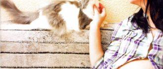 коты и беременность