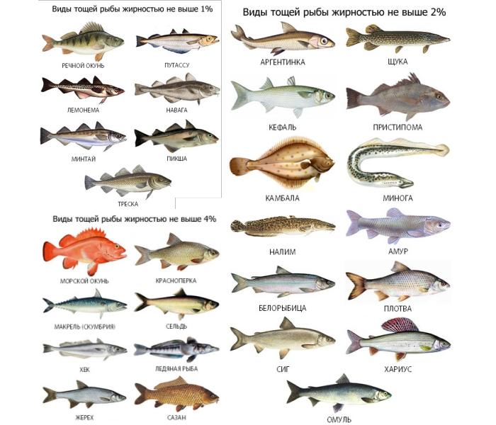какую рыбу можно беременным